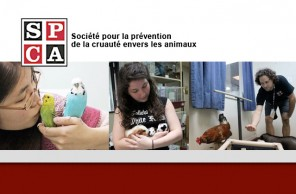 Montréal SPCA