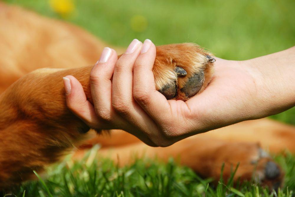 Un chien sert la main d'un humain