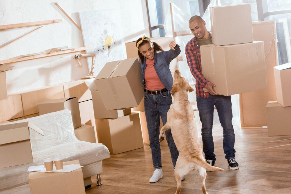 Un couple qui déménage des boîtes avec un chien enjoué