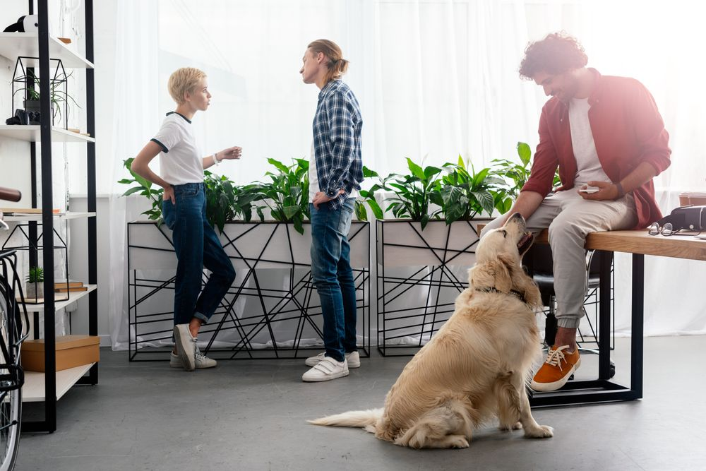 Discussion entre le propriétaire et sa locataire ainsi qu'un homme qui joue avec un chien