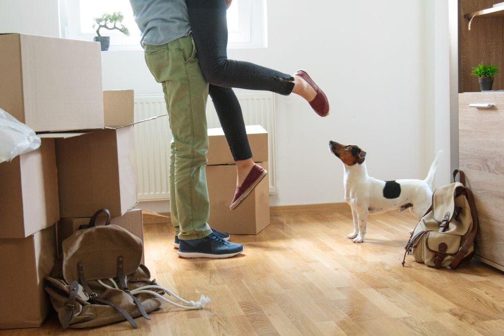 Un couple s'enlace à côté de leur chien et des boîtes de déménagement