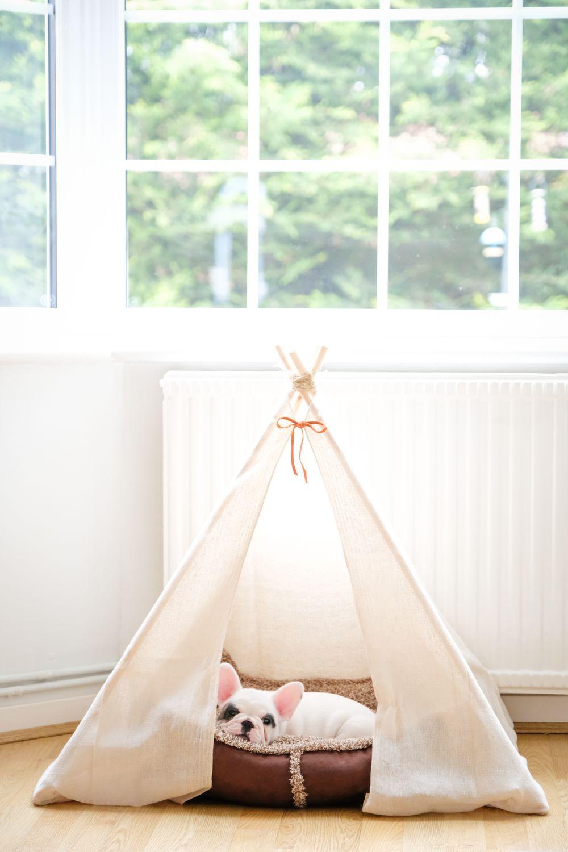 Chien couché dans une petite tente