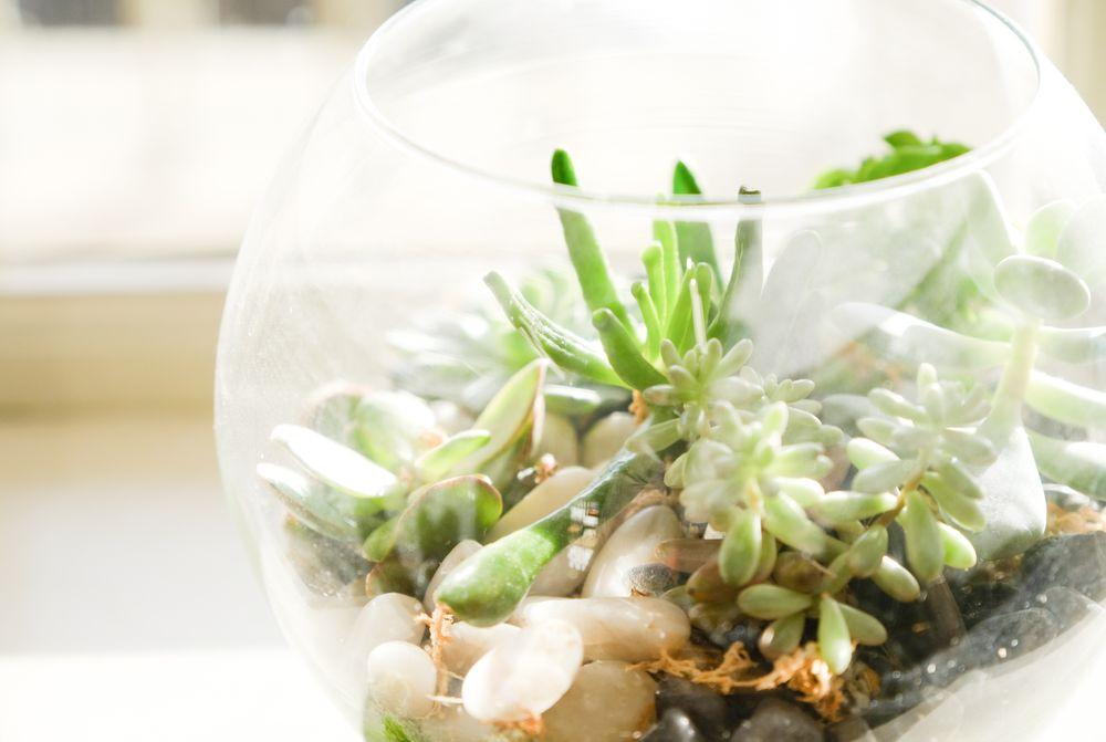 Terrarium avec succulentes