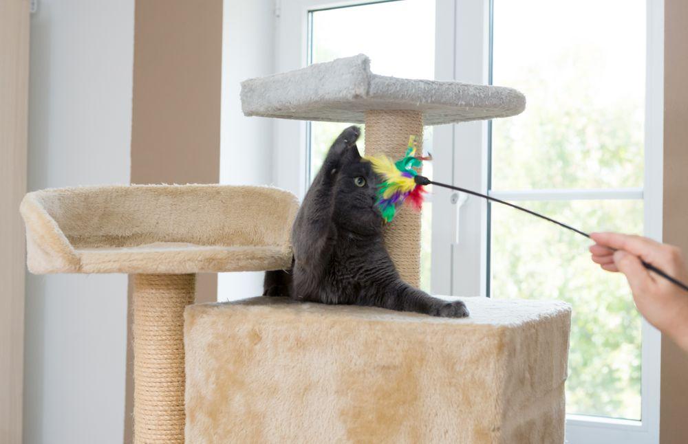 Chat jouant dans un appartement