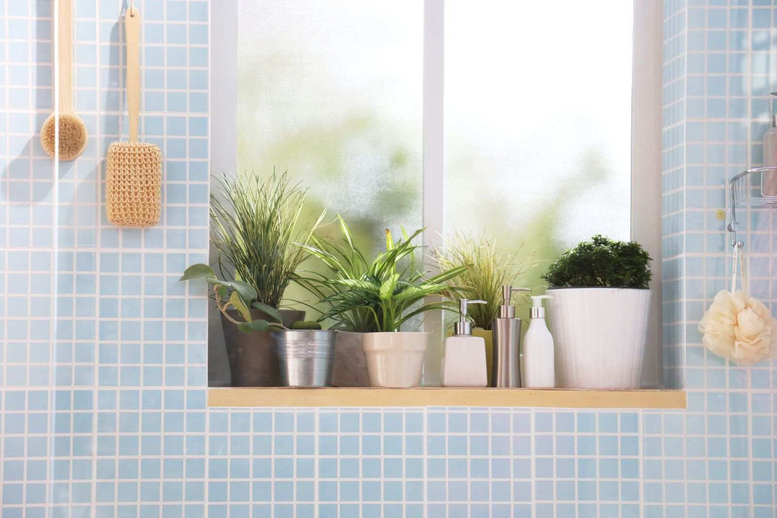 plantes salle de bain carrelage bleu