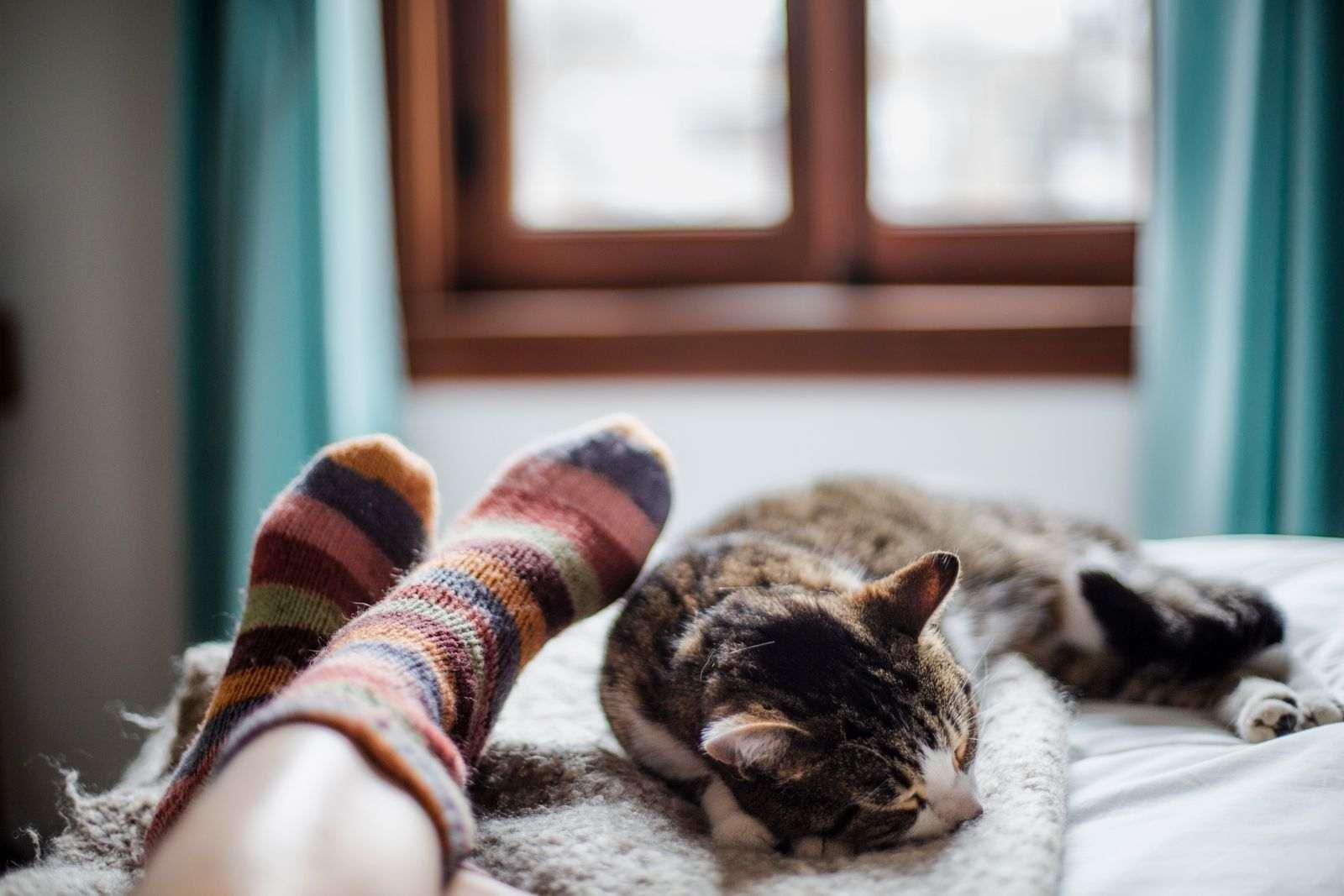 chat couché pied du lit