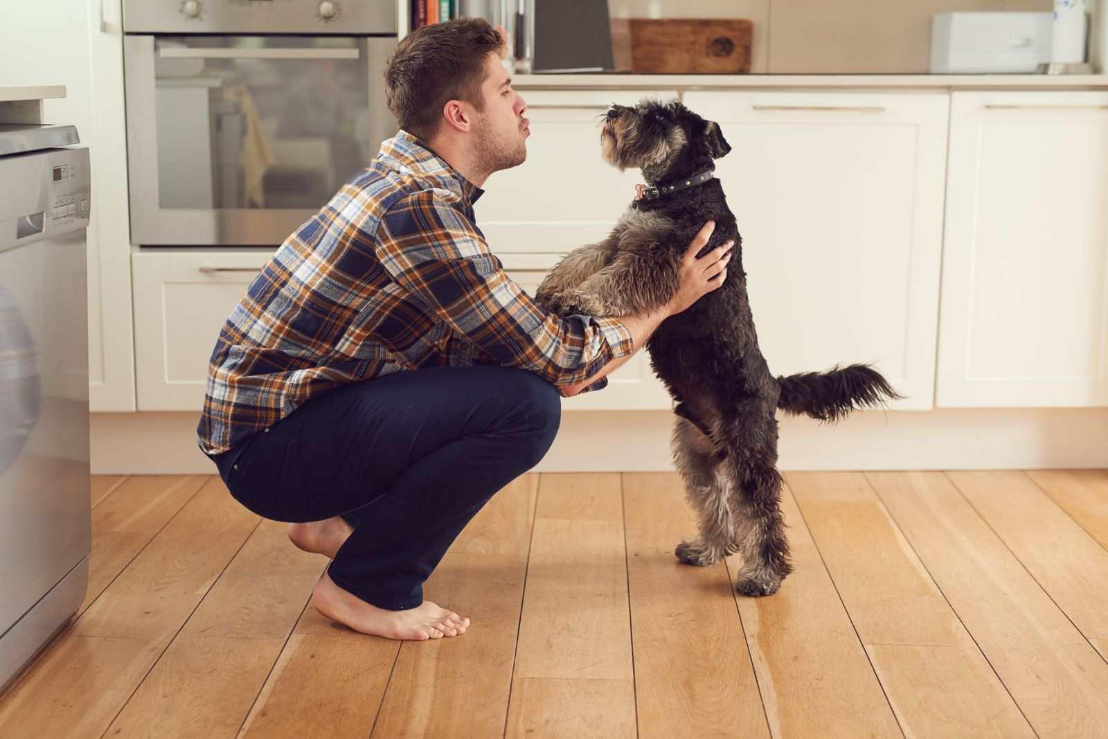 chien debout avec son maître cuisine