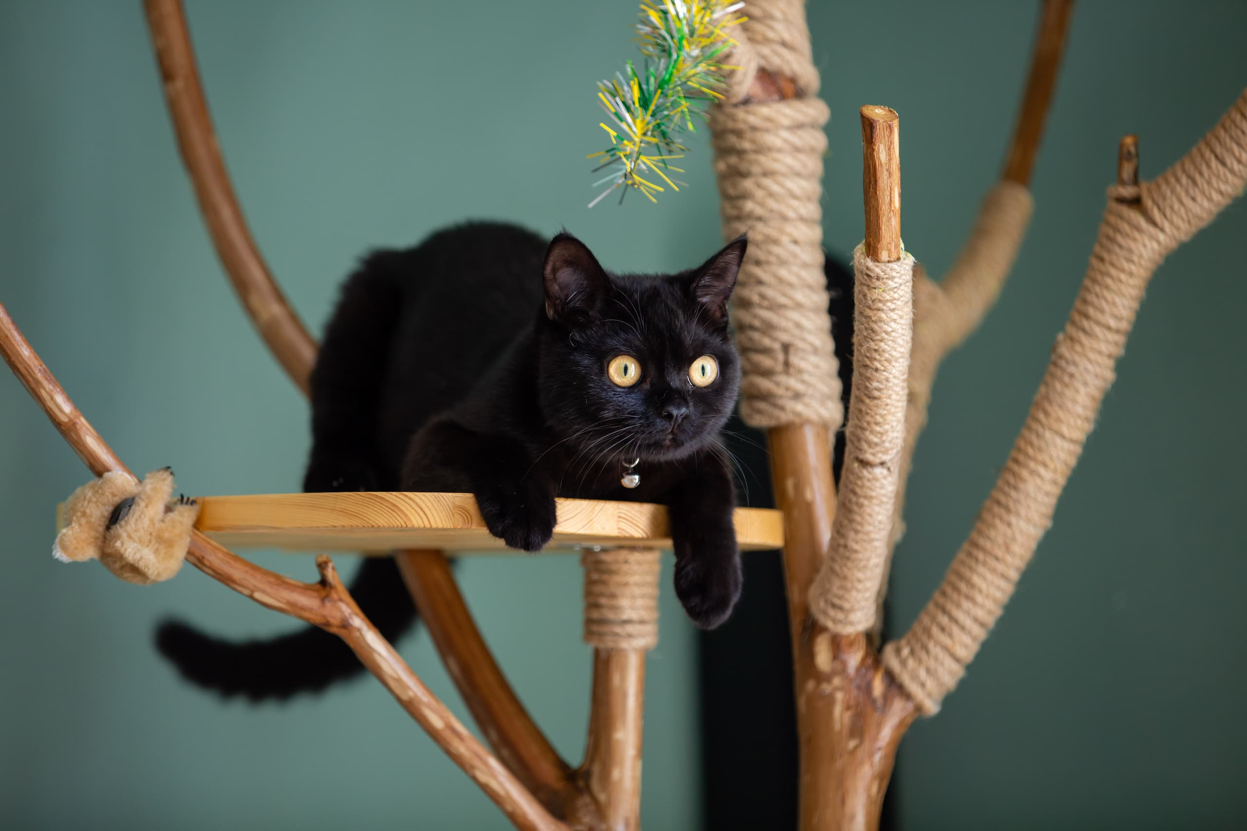 Chat noir dans un arbre à chat de style naturel