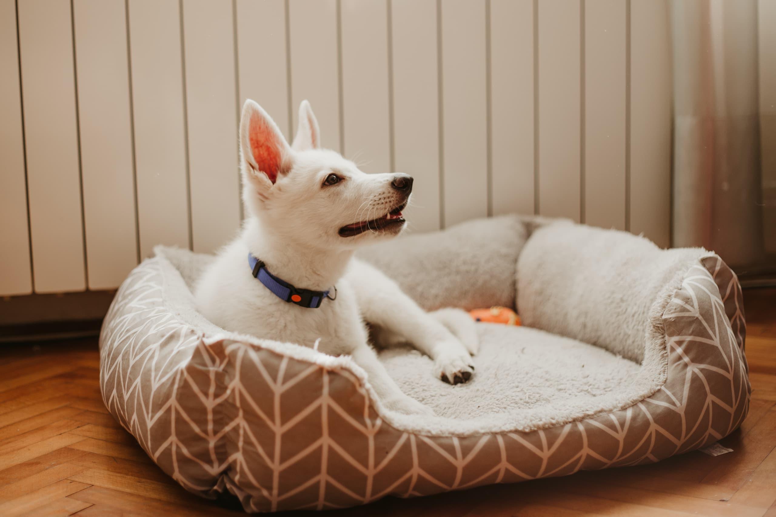 Chien blanc dans son lit pour animal de compagnie