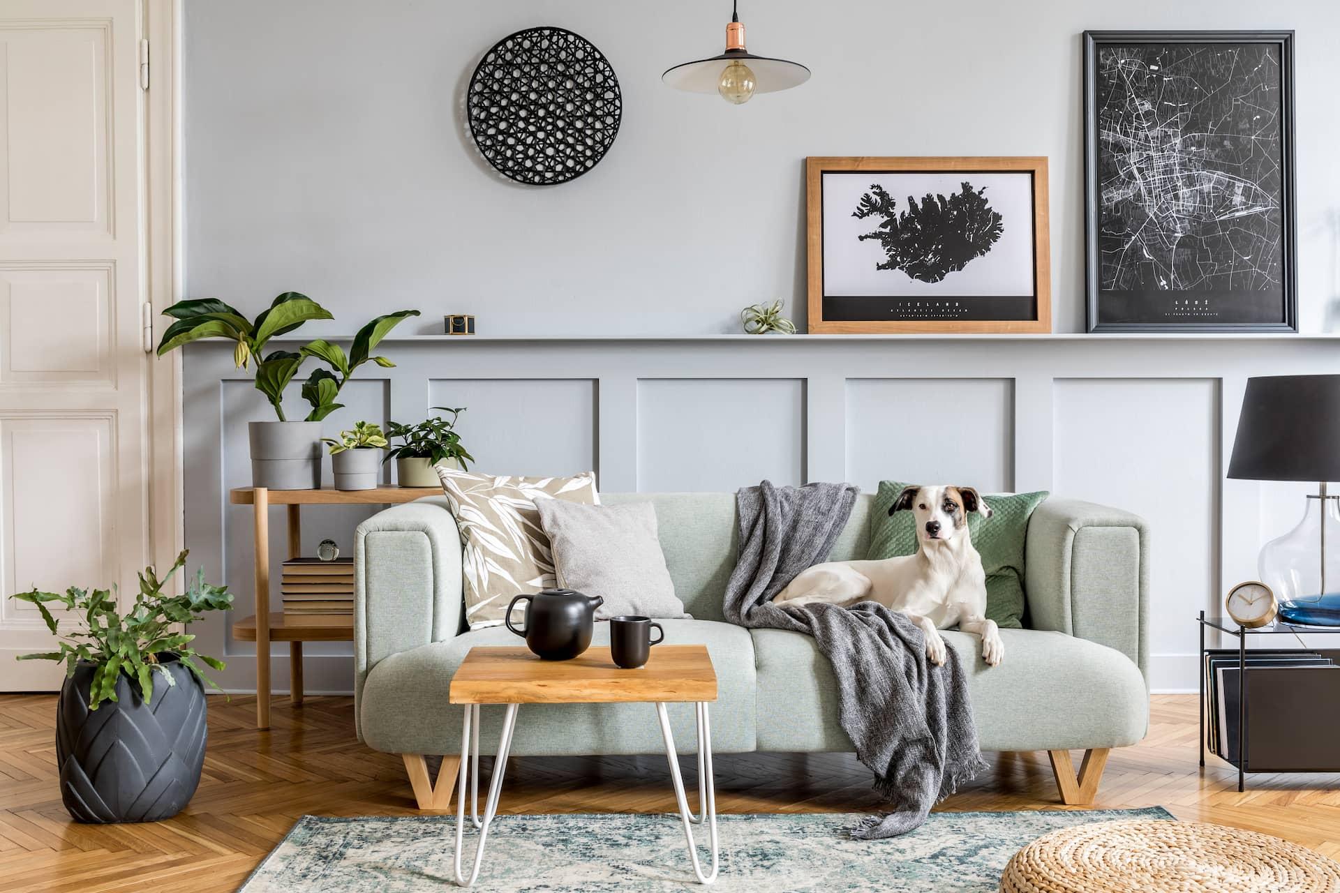 Salon décor bohème avec un chien sur le canapé